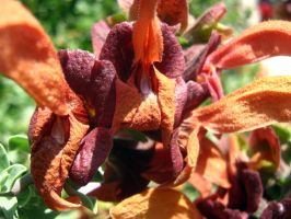 Orange and Red Plant by my-dog-corky