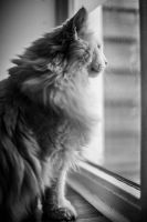 Watching the world by TLO-Photography