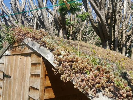 Raising Sedum green roof organic textile. by Bubblypies