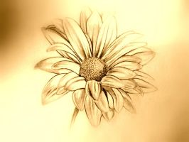 Sepia beauty... by ansdesign
