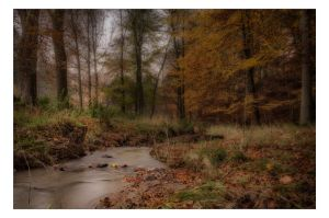 A Creek by AndersStangl