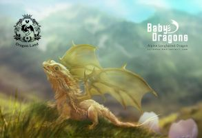 Alpine Longhaired Baby Dragon by cylonka