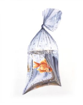 Fish in a Bag by STEVE0671