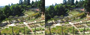 Stereograph - Rose Garden by alanbecker