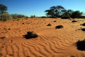 Auob Country Lodge, Namibia 55 by ElSpaZo