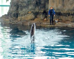 Dolphin Show 1 by moonlightrose44