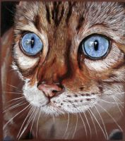 Blue eyes cat. by AnjuttaS