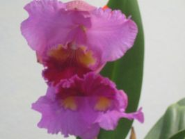 148 orchid show by crazygardener
