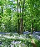 Bluebell Wood 17th May 2015 by Its-Only-Art
