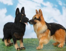 Needle Felted German Shepherd Pair by heartfeltcanines