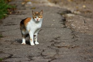 A cat II by DenChetto