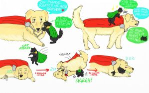 Happy birthday Florbe Like cat and dog by IllyDragonfly