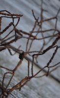 rusted chicken wire focusing by PAlisauskas