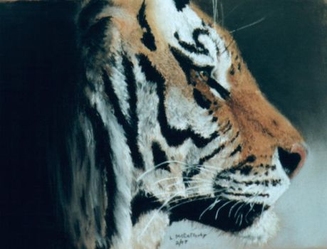 :Tiger Profile: by taleendproductions