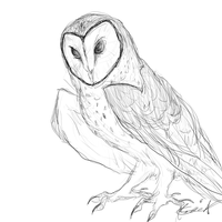 Quick owl by Creeate97