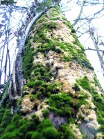 Tree in moss by MannyDiax