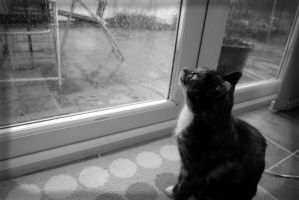 The weather outside is frightful by ShAzZa-UK