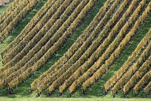 Through the Grapevines by organicvision