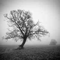 Portrait of the tree IX by EmilStojek