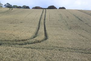 Harvest Nearly Here. by rogerdurling