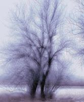 Winter Tree 01 by mimustock