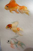 gold fishes by bunnehloverr