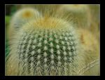 My Little Cactus by albatros1