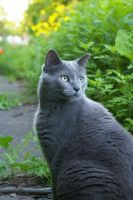 Grey Cat.2 by MargaretAntillPhotos