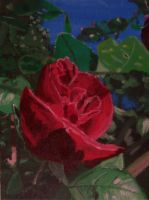 Red Rose by PlayerBill