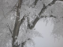 Plants - Frosted Branches 2 by Qrinta