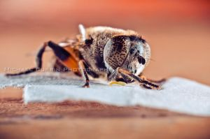 Bee - extension tube test III by TheSoftCollision