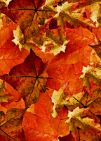 Book Cover Autumn Leaves V2 by WDWParksGal-Stock