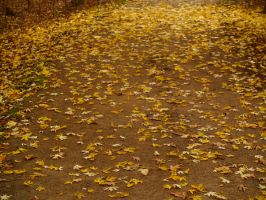 Scattered II by treehugginhippie