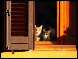 Cats-Windows by kanes