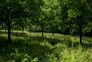 Meadows and Trees 6 by LuDa-Stock