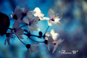 Fading white in blue mornings by aneresia