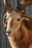 Color Study - Goat by ConejoBlanco