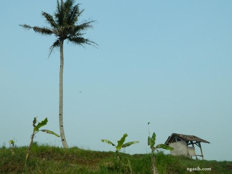 Hut, Coconut And Banana Trees by ngasih