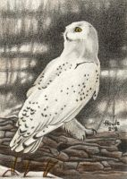 Ever Watchful - Snowy Owl by HOULY1970