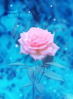 dreamy pink rose by imwd