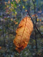 Fall leaf II by Wolverica