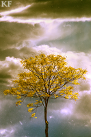 Tree storm by Ironwi11