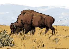 Bison by TheKunterbunter