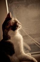 cat on the window by LuanaRPhotography