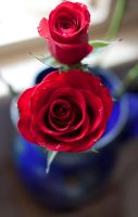 Roses Stock by CNStock