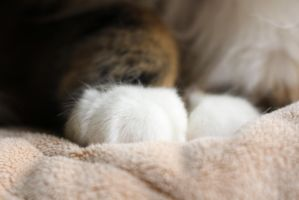 .Paint Paws. by decayedroses