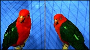 Parrot collage by tere-fere-qq