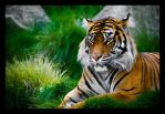 Tiger5 by JMarie-Photography