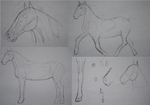 Horse practise/study by Nazus-98