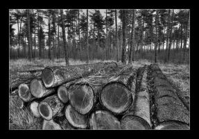 stacked tree trunks by 21711